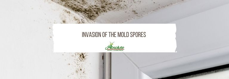Invasion of the Mold Spores – Tips for Successful Mold Remediation