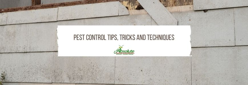 Pest Control Tips, Tricks And Techniques That Work