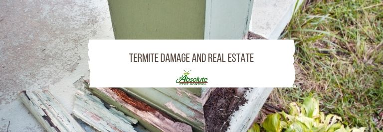 Termite Damage And Real Estate in Middle Tennessee