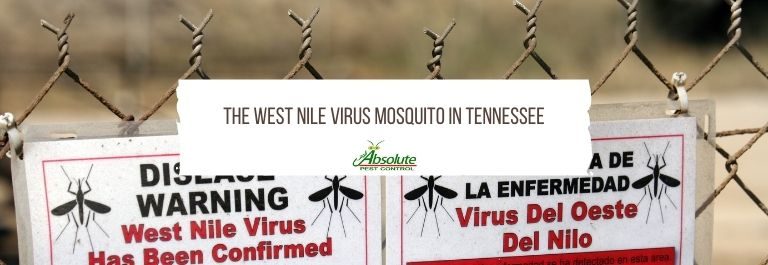 The West Nile Virus Mosquito In Tennessee