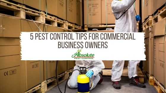 5 Pest Control Tips For Commercial Business Owners