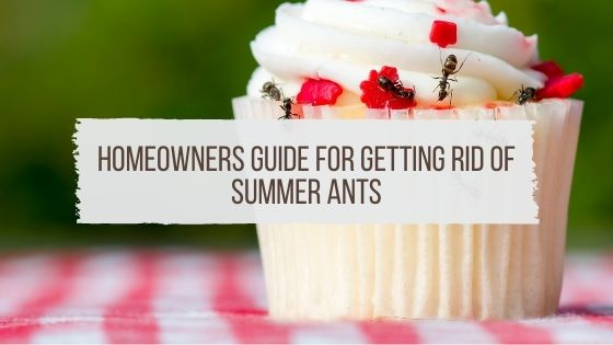 Homeowners Guide for Getting Rid of Summer Ants
