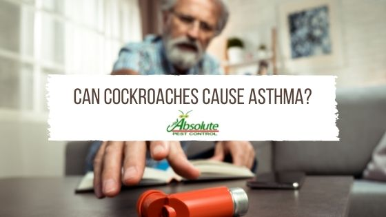 Can Cockroaches Cause Asthma?