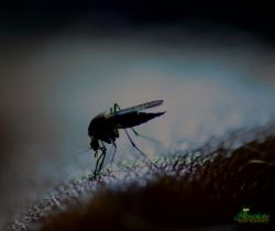 Mosquito treatment in tennessee
