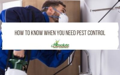 How to Know When You Need Pest Control