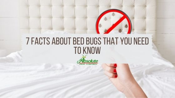 7 Facts About Bed Bugs